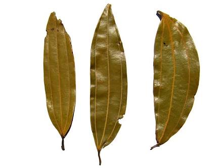 What are Indian Bay Leaves | Tej Patta | Heat in The Kitchen