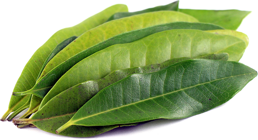 allspice West Indian Bay leaf bayleaf