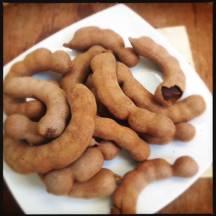 A Note on Tamarind | Heat in The Kitchen | Ingredients | Indian Recipes