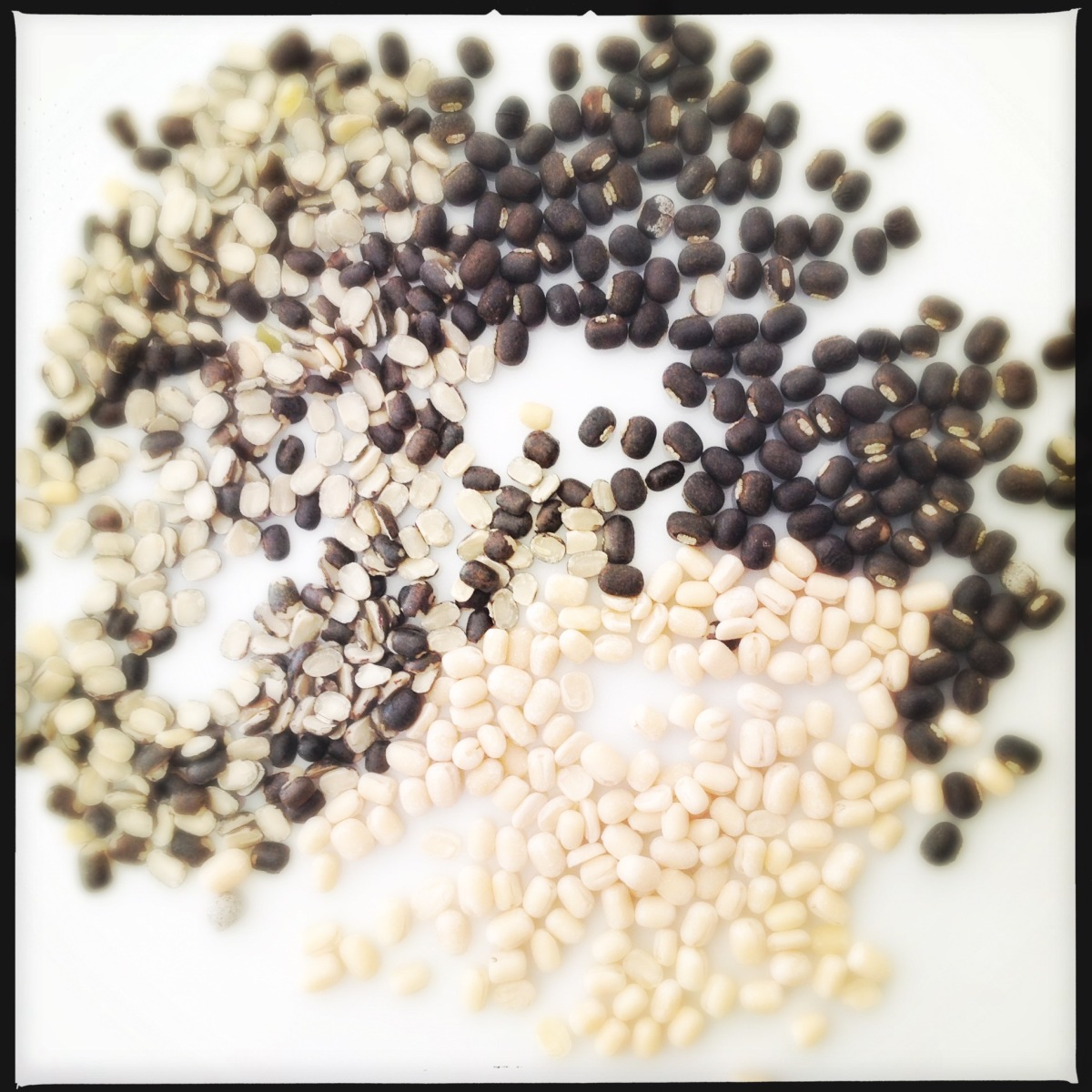 Indian Essentials: What are Urad Lentils? What is Black Gram?