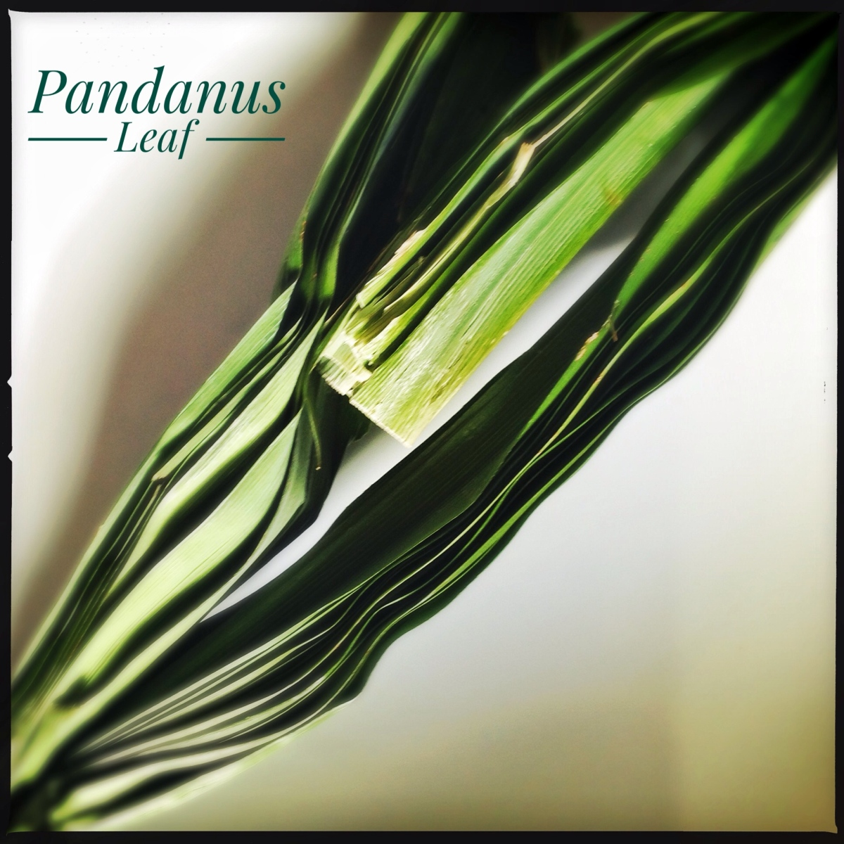 Ingredients: Pandanus | Pandan Leaf | Screwpine Leaf | Rampe | Kewra