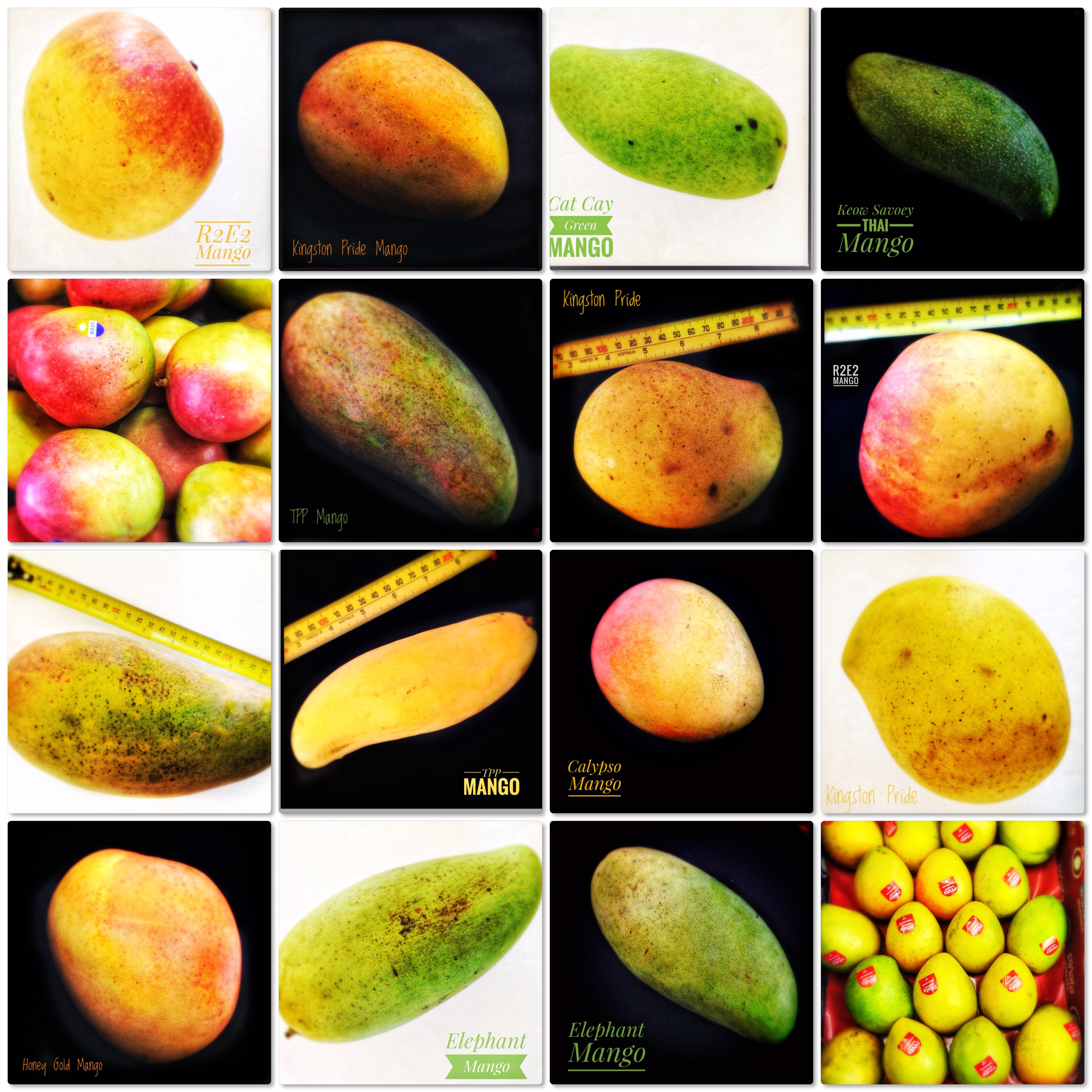 Ingredients: Mango Season! | 13 Locally Available Mangoes