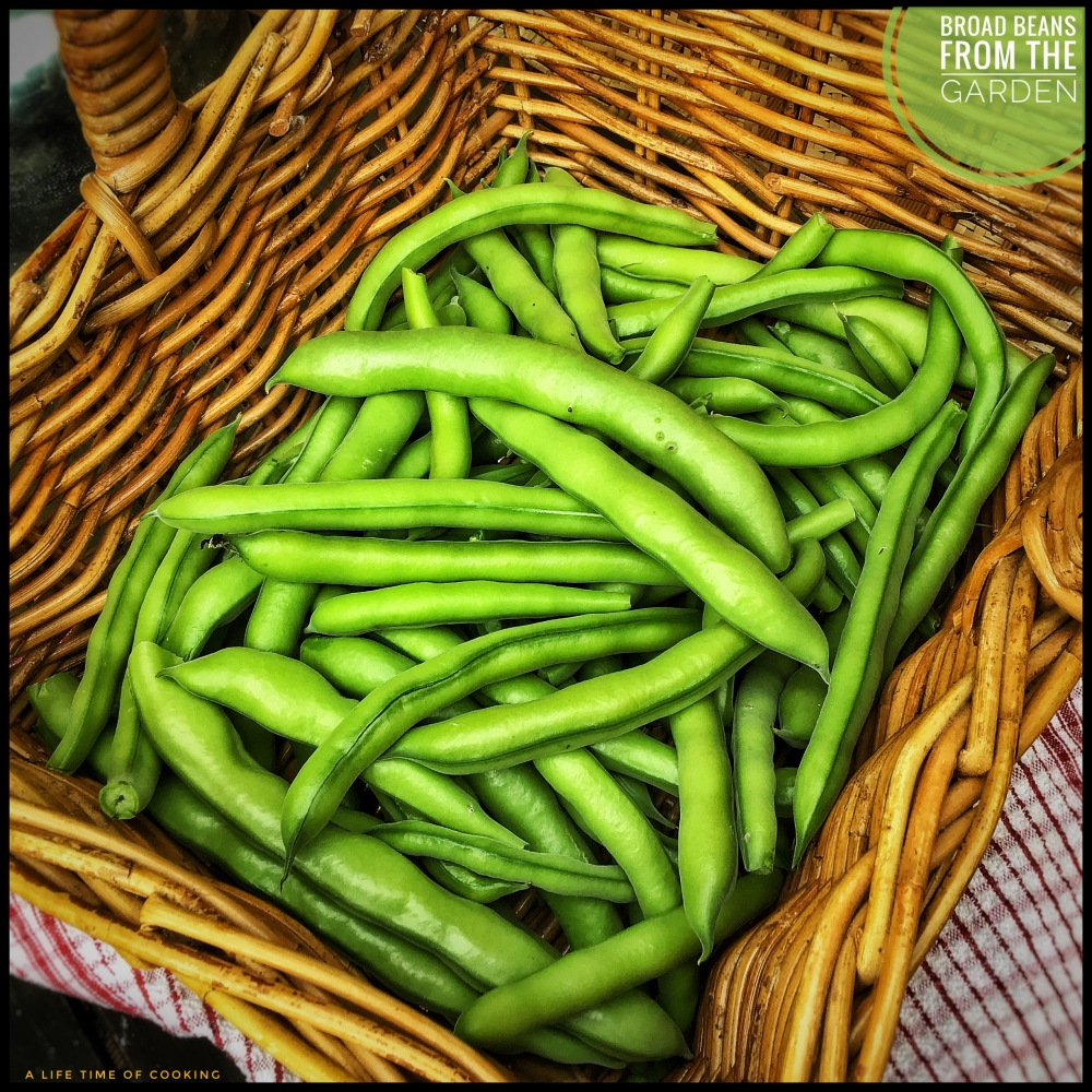 Broad Beans from the Garden