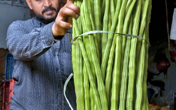 Indian Essentials: How to Buy, Prepare and Eat Drumsticks (Vegetable) and Drumstick Leaves | Moringa