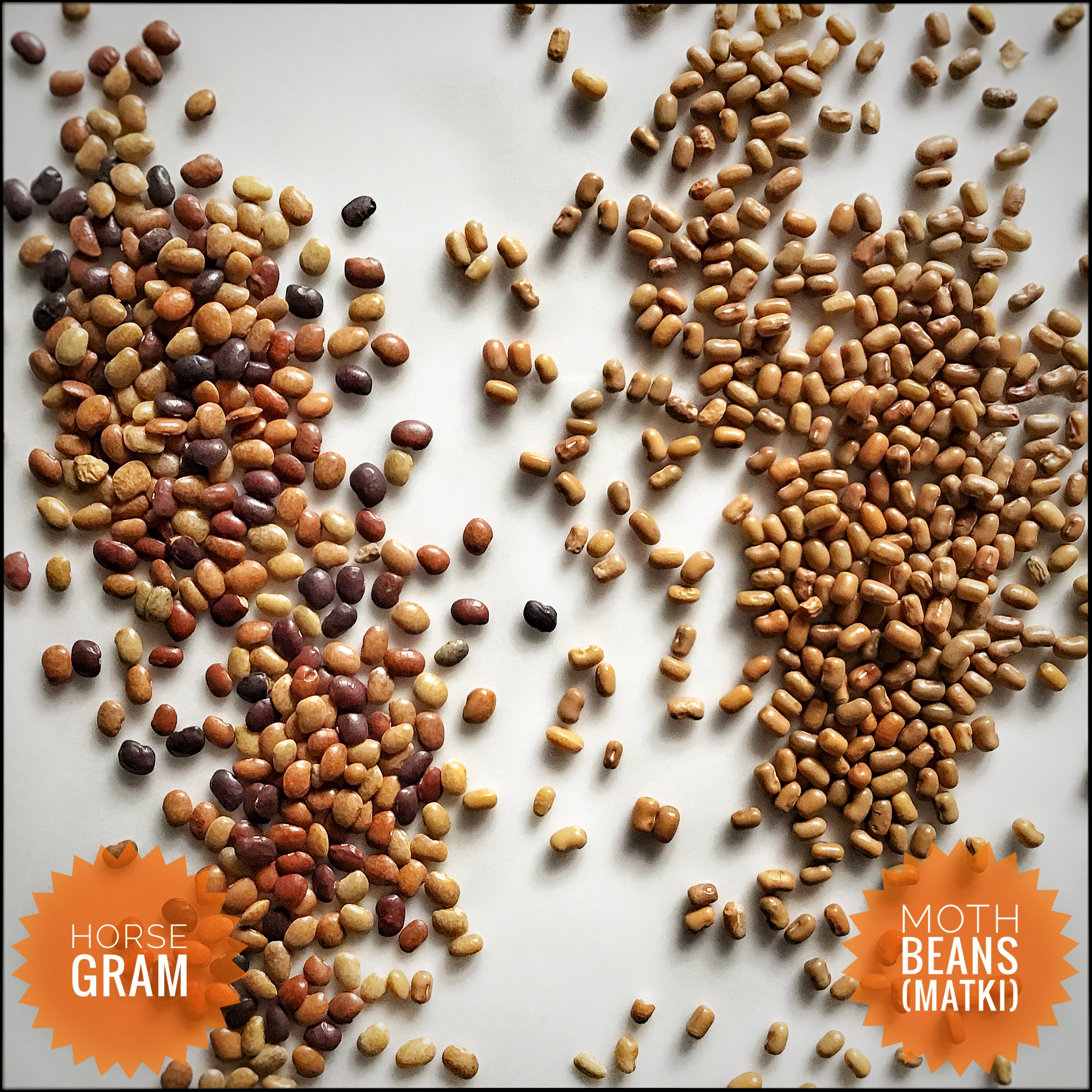 Moth Beans (Matki) and Horse Gram – Different lentils that look similar